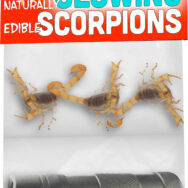 Novelty Style Scorpion Glow Kit