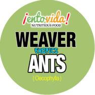 Bulk Weaver Ants