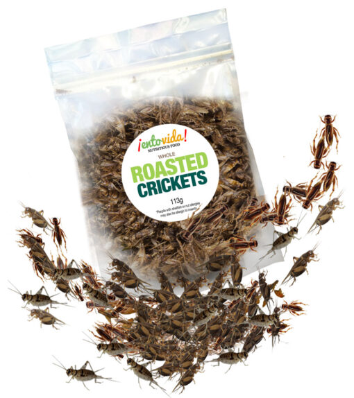 Roasted Crickets For Sale